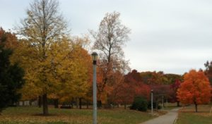 lamposts and trees of all colors-web